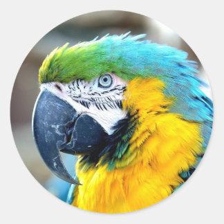Retrato colorido do papagaio - mais doente adesivo