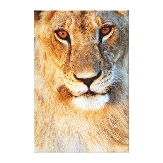 Retrato da leoa (Panthera Leo). Tarangire Impressão De Canvas Esticadas
