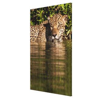 Retrato de Jaguar que nada Impressão Em Canvas