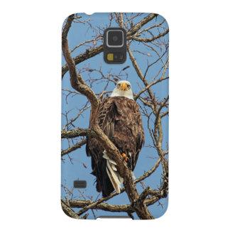 Retrato de uma águia americana capa para galaxy s5