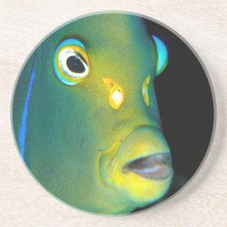 Retrato do Angelfish do Semicircle, baía de Porta Copo Para Bebidas
