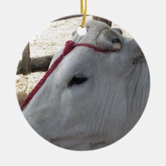 Retrato do Chianina, raça italiana do gado Ornamento De Cerâmica Redondo
