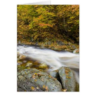 Ribeiro rujir na queda no verde de Vermont Cartão Comemorativo