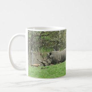 Rinoceronte & caneca do Fox