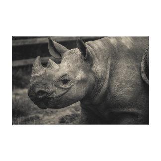 Rinoceronte preto do bebê impressão de canvas envolvidas