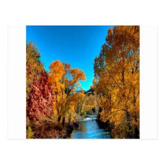 Rio das folhas de outono da árvore cartão postal