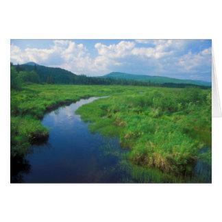 Rio dos alces de Vermont do pântano da vitória Cartão