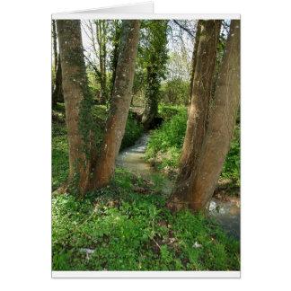 Rio entre árvores em uma floresta cartões