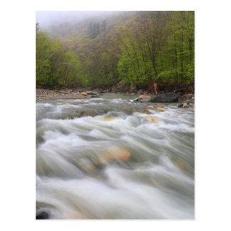 Rio frio na fuga do Mohawk da chuva de primavera Cartão Postal