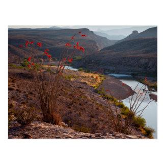 Rio Grande que funciona através do deserto de Cartão Postal