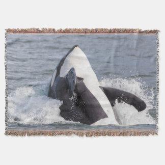 Rompimento da baleia da orca coberta
