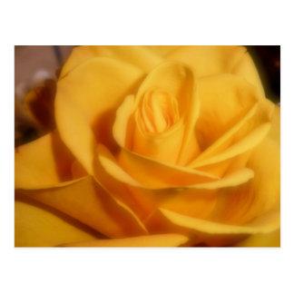 rosa amarelo cartão postal