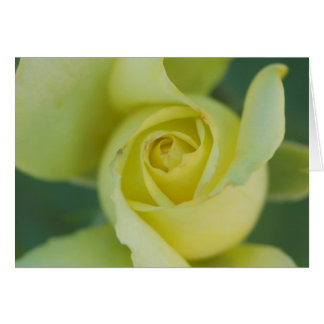 Rosa amarelo II Cartão Comemorativo
