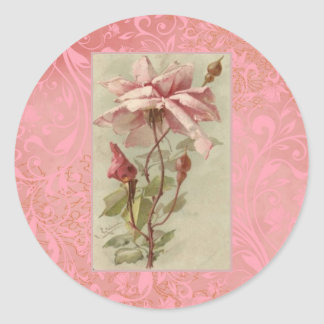 Rosa & botões velhos do rosa de Klein Adesivo