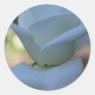Rosa branco puro adesivo