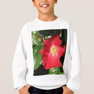 Rosa de arbusto 223 do açafrão agasalho