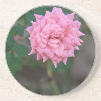 Rosa do rosa porta copos