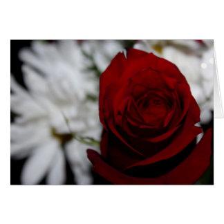 Rosa dos carmesins cartão