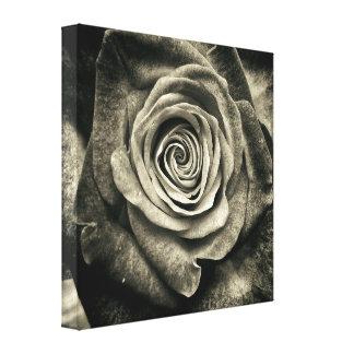 Rosa preto e branco impressão em tela