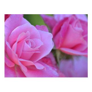 Rosa romântico do rosa floral cartão postal