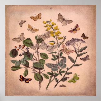 Rosa rústico das borboletas florais botânicas do poster