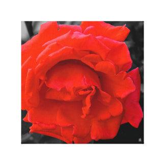 Rosa vermelha impressão em canvas