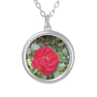 Rosa vermelha colar banhado a prata