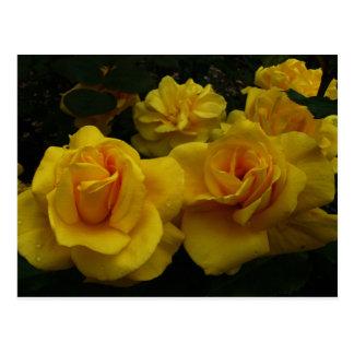 Rosas amarelos cartão postal