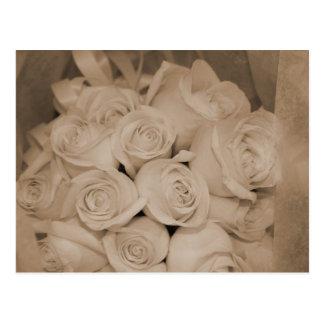 Rosas brancos no Sepia Cartão Postal