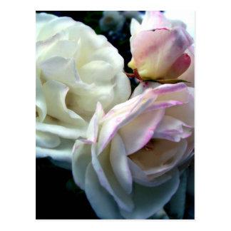 Rosas de Penélope Cartão Postal