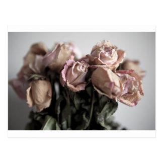 Rosas desvanecidos cartão postal