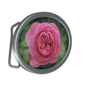 Rosas ovais da fivela de cinto macro