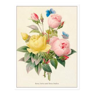 Rosas vermelhos e amarelos por Pierre Joseph Cartão Postal