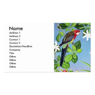 rosella carmesim cartão de visita