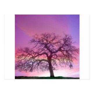 Roxo do inverno das árvores da natureza cartão postal