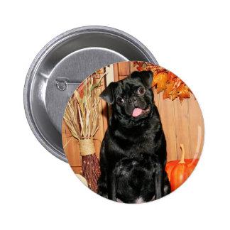 Ruffy - Pug - Photo-7 Pins