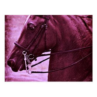 Saddlebred matizado cartao postal