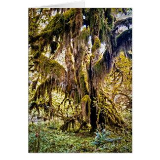 Salão dos musgos arrasta, o parque nacional cartão