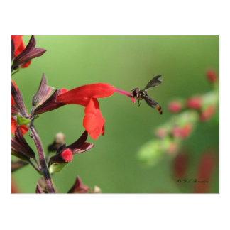Salvia & cartão nativo da abelha