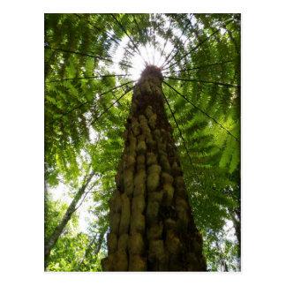 Samambaia de árvore cartão postal