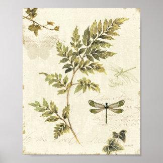 Samambaias decorativas e uma libélula poster