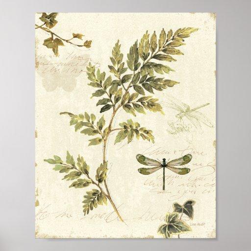 Samambaias decorativas e uma libélula impressão