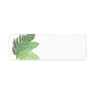 Samambaias do verde de musgo etiqueta endereço de retorno