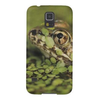 Sapo de leopardo do Rio Grande, berlandieri de Capa Para Galaxy S5
