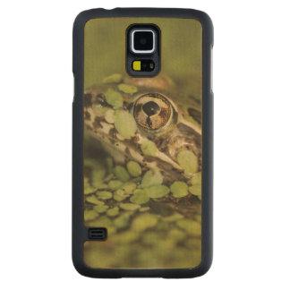 Sapo de leopardo do Rio Grande, berlandieri de Case De Bordo Para Galaxy S5
