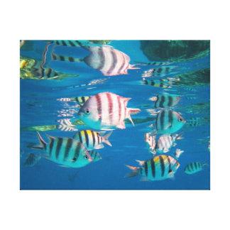 Sargento major peixe impressão em tela