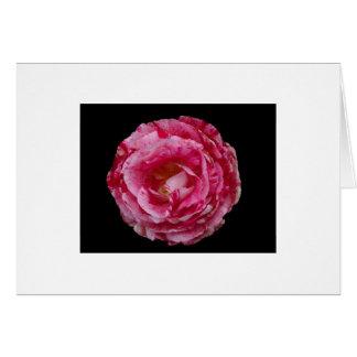 Scentimental Floribunda Notecard cor-de-rosa Cartão De Nota