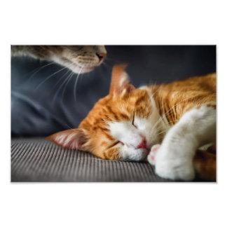 Se cheira como um gato…. impressão de foto
