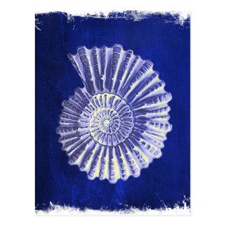 seashell branco azul litoral botânico do vintage cartão postal
