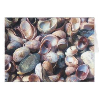 Seashell Notecard Cartão De Nota